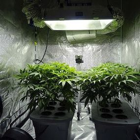 best carbon filter for grow rooms