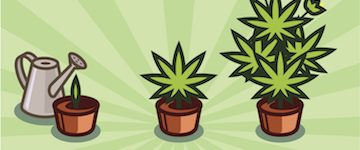 Best Grow Bags For Weed