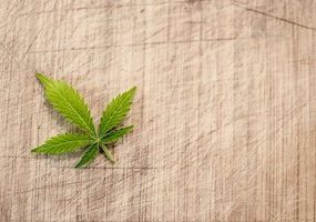 How To Tell If You Have An Autoflower or photoperiod